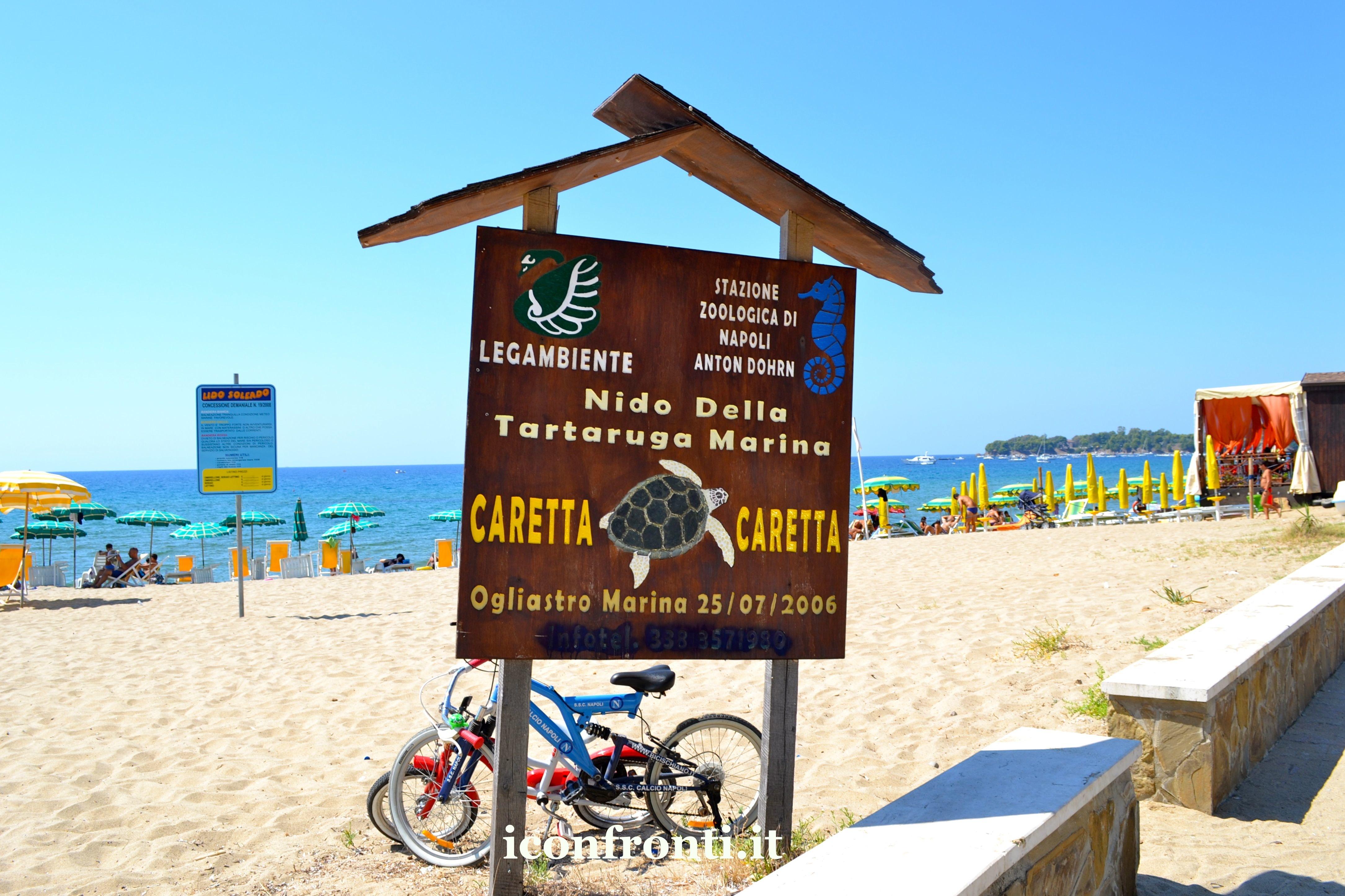 Caretta caretta, polemiche ad Ogliastro tra residenti e turisti