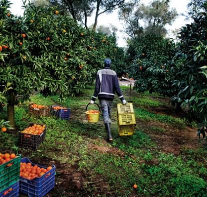 Con la crisi diminuiscono anche i lavoratori stranieri in campagna