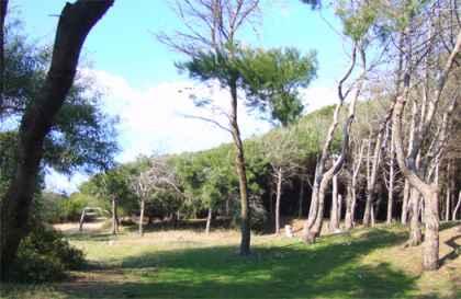 Intesa per la salvaguardia del territorio e della pineta nella fascia costiera