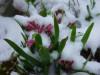 fiori neve