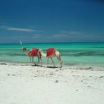 Djerba-cammelli-sulla-spiaggia